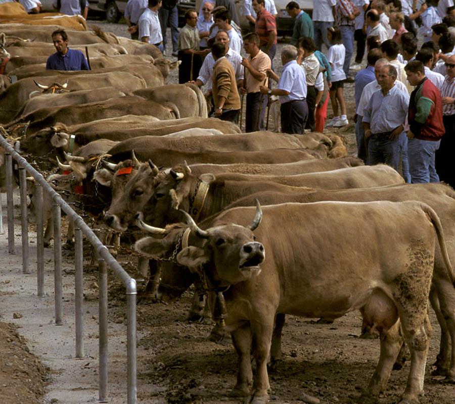 Mercados y Ferias Comarca Alto Gállego