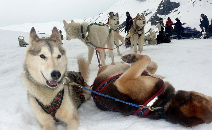 trineo con perros en la comarca alto gallego