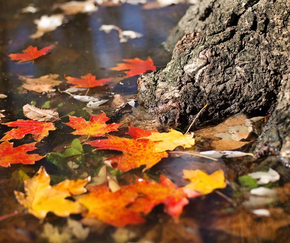 otoño Alto Gállego